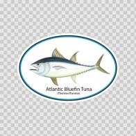 Atlantic Blue Fin Tuna 06211