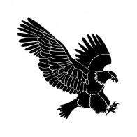 Eagle Attack 07182