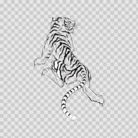 Tiger 08374