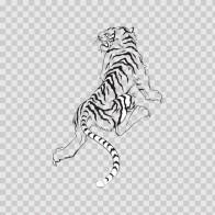 White Tiger 08375