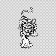 White Tiger 08384