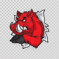 Razorback Wild Pig Tearing 09171