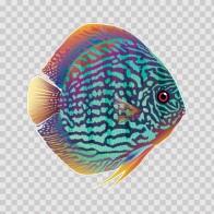 Discus Royal Aquarium 21617
