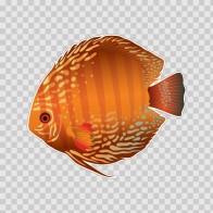 Discus Fish Aquarium 21888