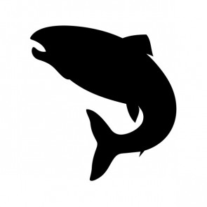 Salmon Fish 00836