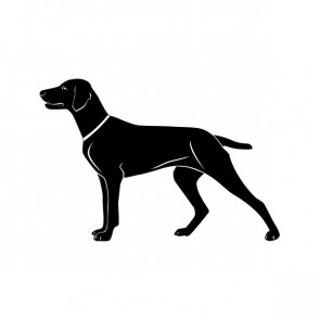 Domestic Dog 00889