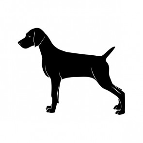 Domestic Dog 00891