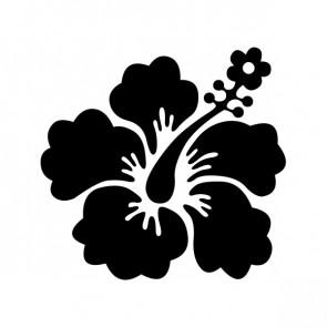 Hibiscus 00903