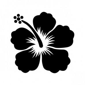 Hibiscus 00905
