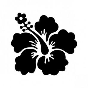 Hibiscus 00909