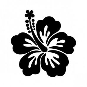 Hibiscus 00916