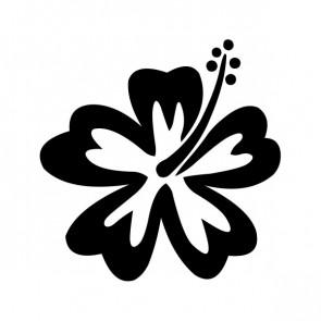 Hibiscus 00917