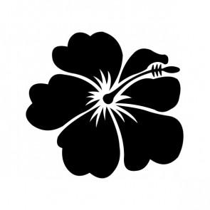 Hibiscus 00920