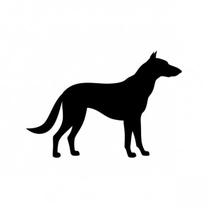 Domestic Dog 01884