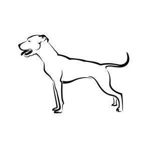 Domestic Dog 03468