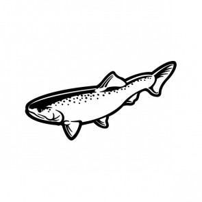 Trout Fish 06090