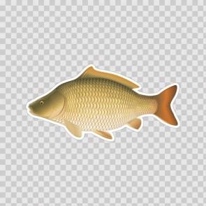Carp Fish 06202