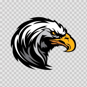 Bald Eagle Head 08117
