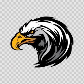 Bald Eagle Head 08118