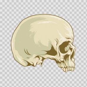 Ancient Skull 12189