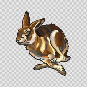 Rabbit 12448