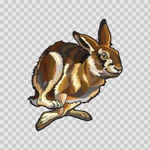 Rabbit 12449