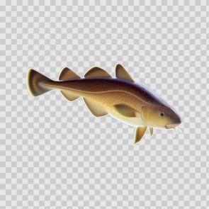 Lake Fish 13161