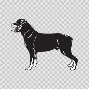 Rottweiler Dog 13276