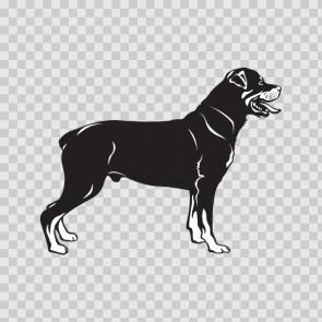 Rottweiler Dog 13277