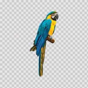 Macaw Parrot 13810