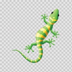 Lizard Gecko 14720