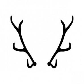 Deer Horns 15385