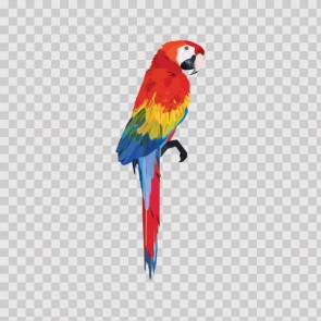 Macaw Parrot 15602