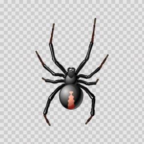 Spider 15607