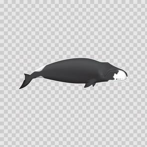 Whale 21740