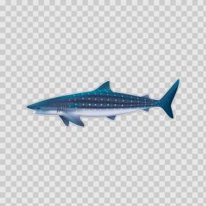 Whale Shark 21762