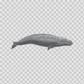 Whale 21770