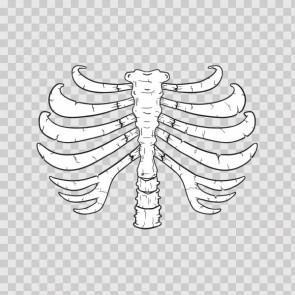 Skeleton 21912