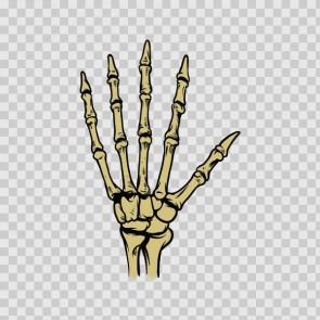 Skeleton Hand 22502