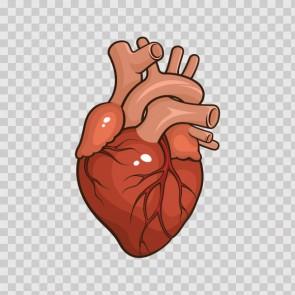 Heart 23065