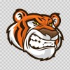 Tiger 01952