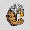 Bald Eagle Bodybuilder 03293