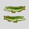 Pair Of Pike Lake Fish 05853