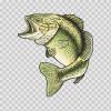Bass Fish 05908