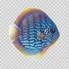 Discus Royal Aquarium 21618